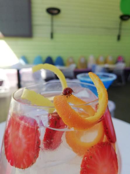 Cocktails en Terraza Hotel Indigo