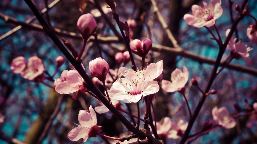 Primavera en Madrid: ¿Tienes planes para salir?