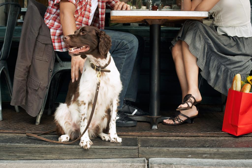 Perro sentado en una terraza