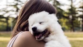 Día Mundial del Perro, ¿cómo celebrarlo con tu mejor amigo peludo?