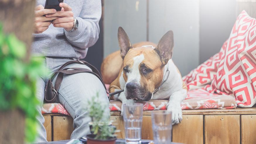 Los mejores restaurantes dogfriendly en Madrid