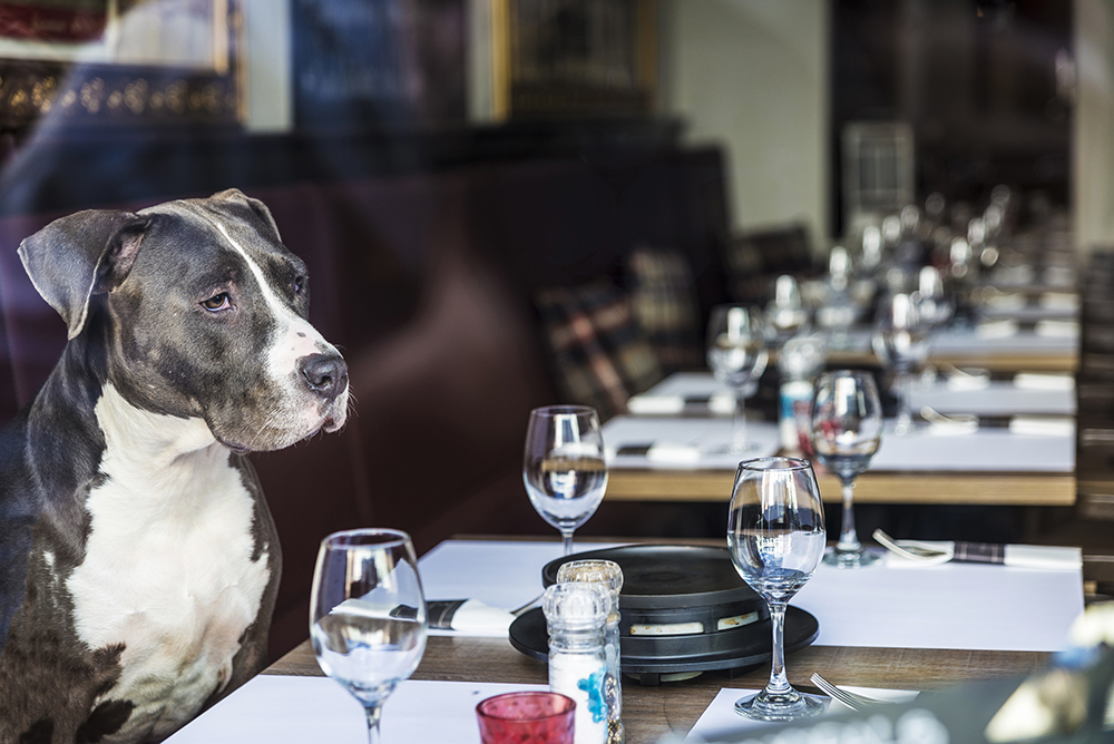 Perro a la mesa, restaurante de Madrid, Gavirental